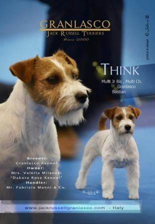 GR, HR, IT CH, Multi JCH Granlasco Bastian - Jack Russell Terrier Granlasco