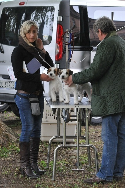 The GranLasco Kennel is run by Dr. Ferdinando Asnaghi & Dr. Annalisa Marinelli - Jack Russell Terrier Granlasco